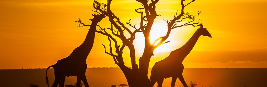 Tembea Kenya Cover Image